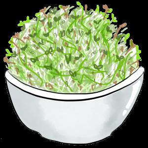 Picture of alfalfa