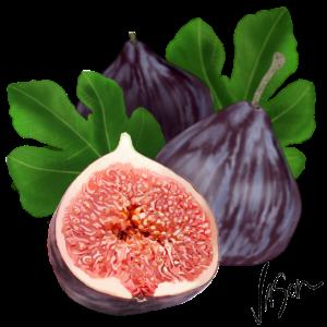 figs 2 640x640