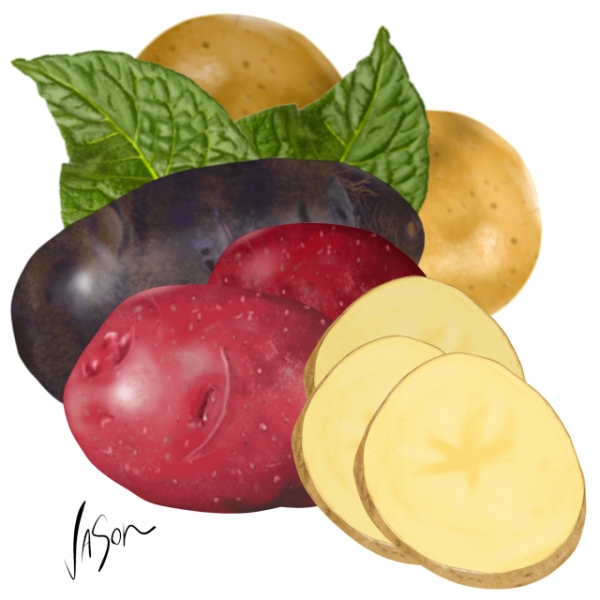 Illustration of potatoes